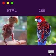 سی اس اس ها چیستند؟ html
